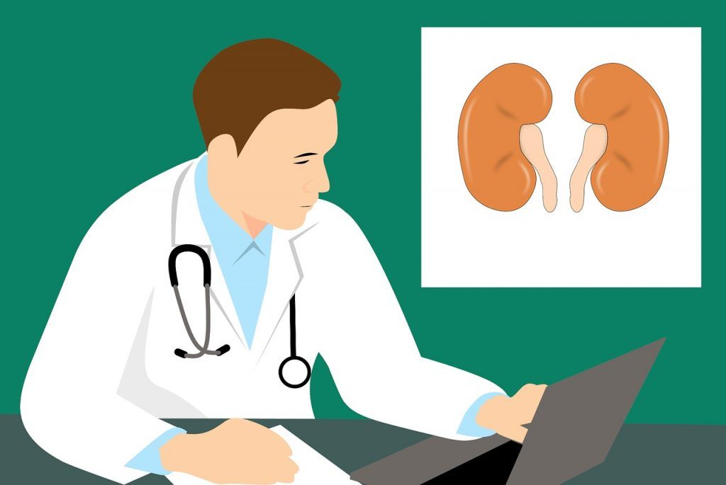 Kidney doctors: what does a nephrologist do?