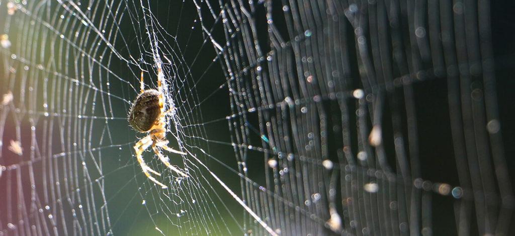 Spider venom strikes a blow against childhood epilepsy