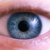 Ischaemic maculopathy picture