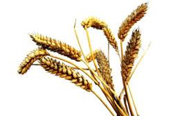 Grains (cereals)